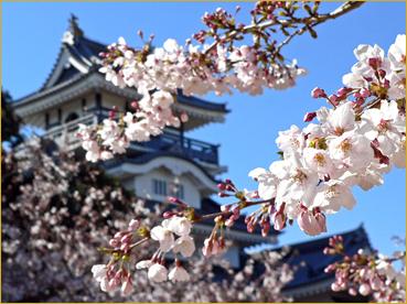sakura-en-japon.jpg