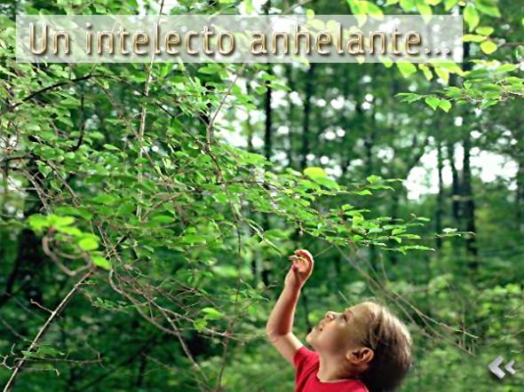 Un_intelecto_anhelante__Vajarayana_Blog
